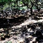 3 mahabaleshwar graveyard