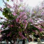 1 Adana street