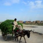 7 Sindh roads