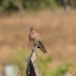 7 Kartong Collins bird reserve