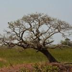 8 Kartong Collins bird reserve