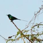 12 Kartong Collins bird reserve