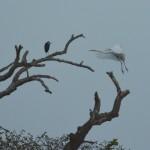 14 Kartong Collins bird reserve