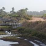 22 Kartong Collins bird reserve