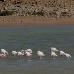 12 day 3 AND FLAMINGOS!!!