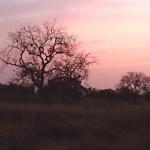 10 sunset