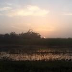 17 Kartong Collins bird reserve