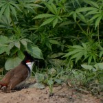 rhino land garden