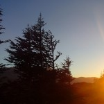 Sunset and cedars