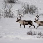 Trip to Kiruna