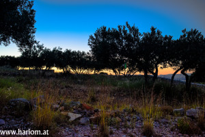 olive sunset